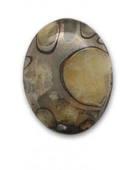 Ammonite pyritisée