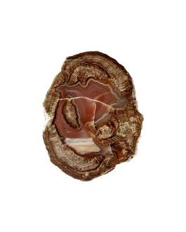 Lithophyse