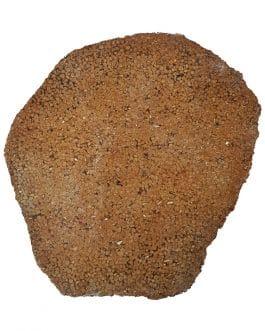 Tranche : Corail fossilisé
